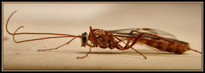 Baby Wasp ?