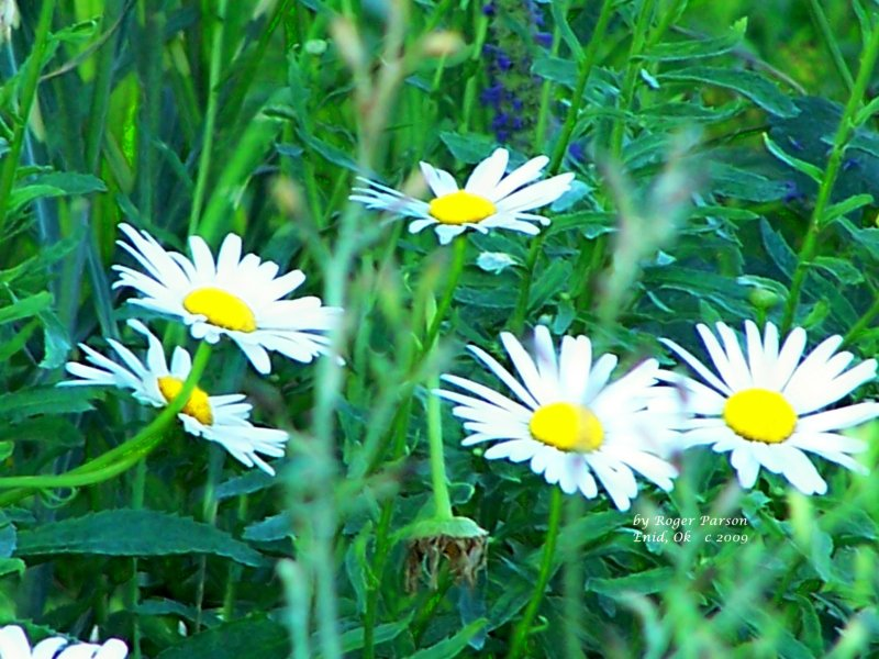 Flowers 115.JPG