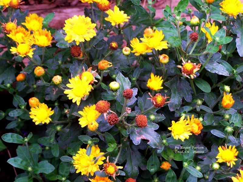 Flower 139.JPG
