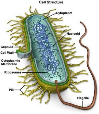 Micoplasmoza