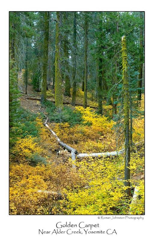 Golden Carpet.jpg   (Up To 30 x 45)
