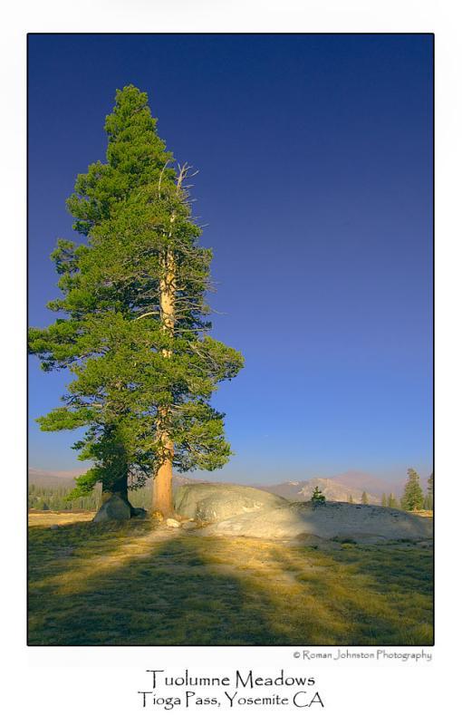 Tuolumne Meadows.jpg   (Up To 30 x 45)