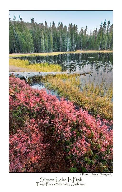Siesta Lake In Pink.jpg