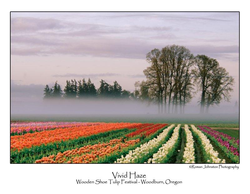 Vivid Haze.jpg (Up To 30 x 45)