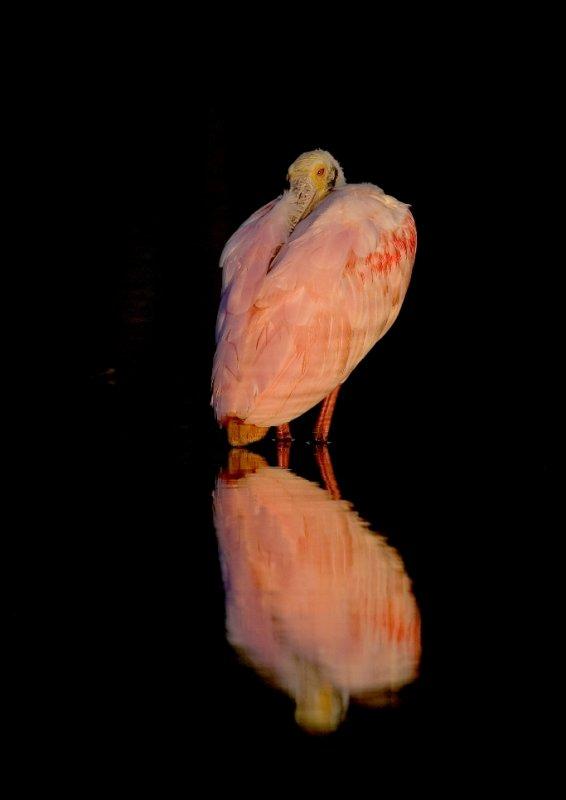 Sleepy in Pink