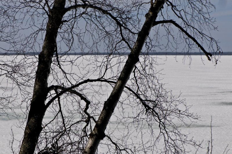 Branches and frozen lake