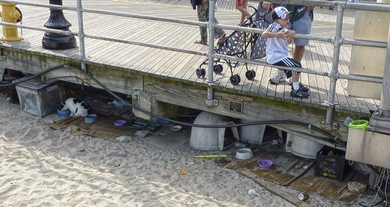 P1000462 Under the boardwalk.