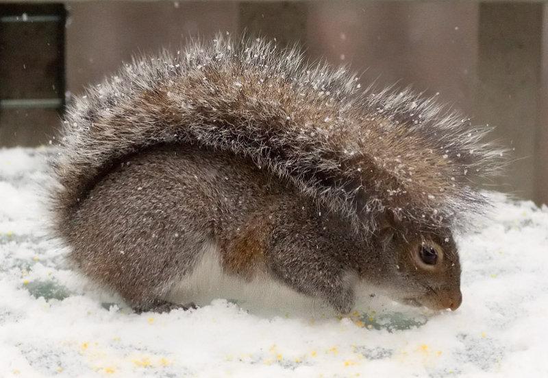 _MG_0095 Squirrelbrella