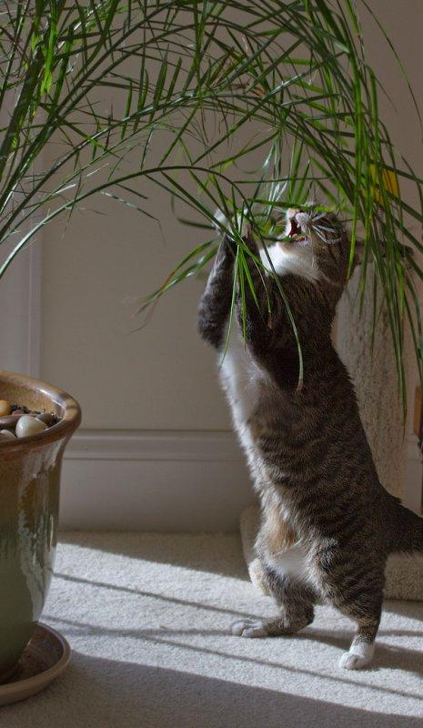 _MG_0061 jungle cat