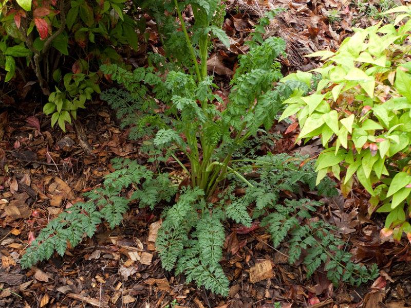 P1080062 Do you recognize this foliage?