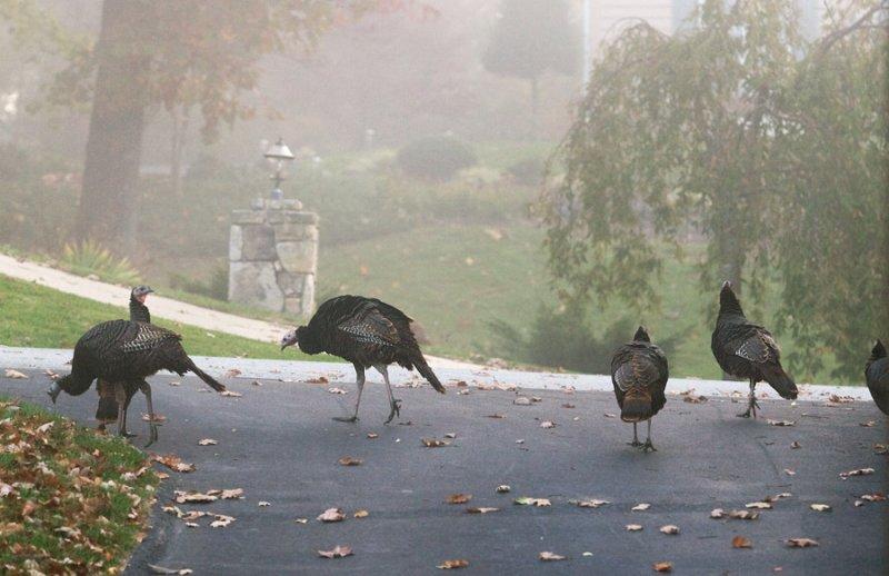_MG_9565 Foggy Morning Visitors