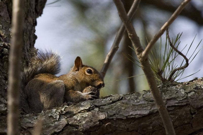 _MG_3467 Noisemaker in Tree
