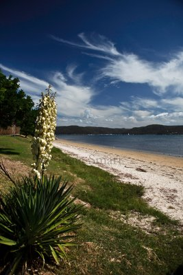 Barrenjoey with plant