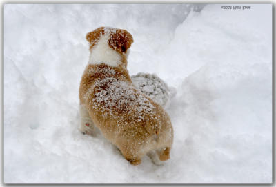 Is That A Snow ... Bunny?