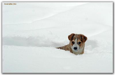 Snow Dawg