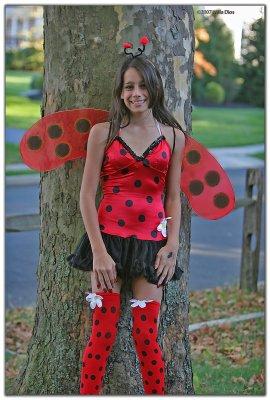 Halloween Lady Bug