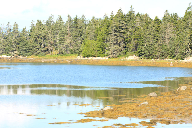 Bay near Schoodic area
