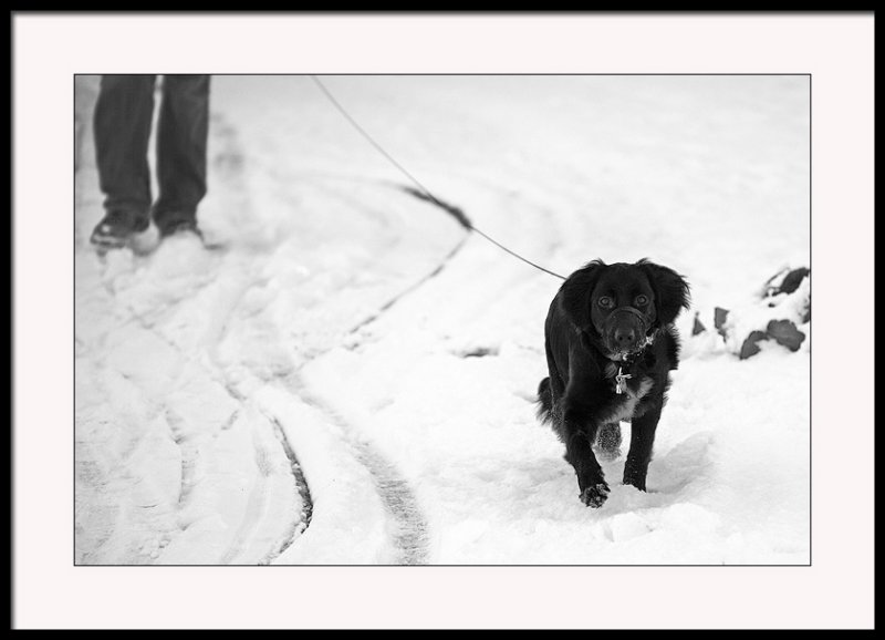 Lead dog....