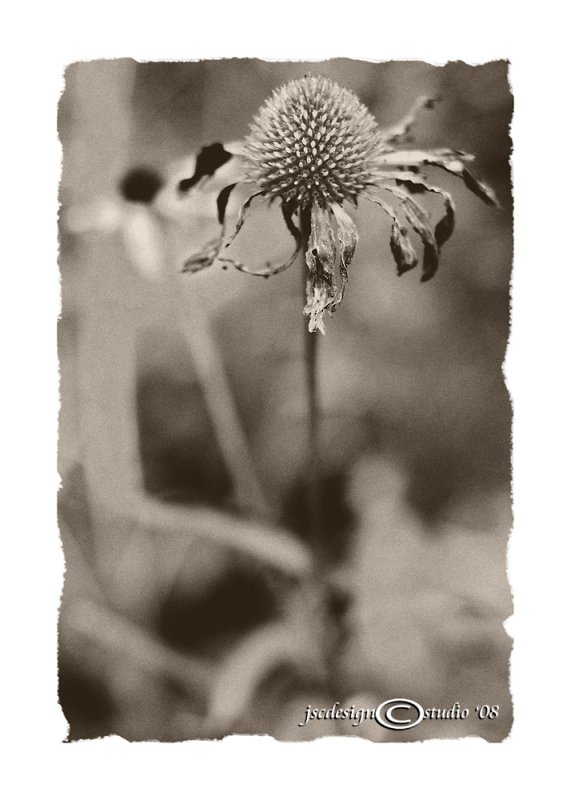 Fading Memories<br>Achromatic August<br>August 10