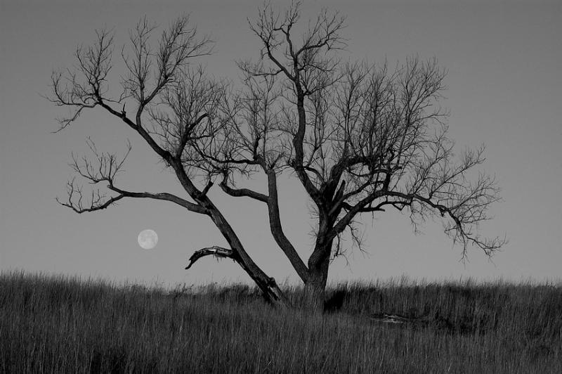Moon & Tree (B&W)