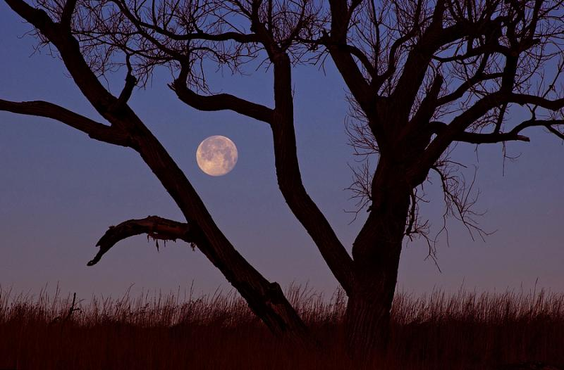 Wolf Moon & Tree (Seat Conservation Area) Exp -2 ev