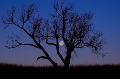 Wolf Moon & Tree (Seat Conservation Area)