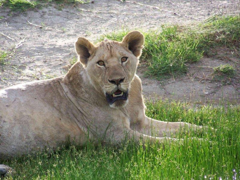 Kenya09-2998