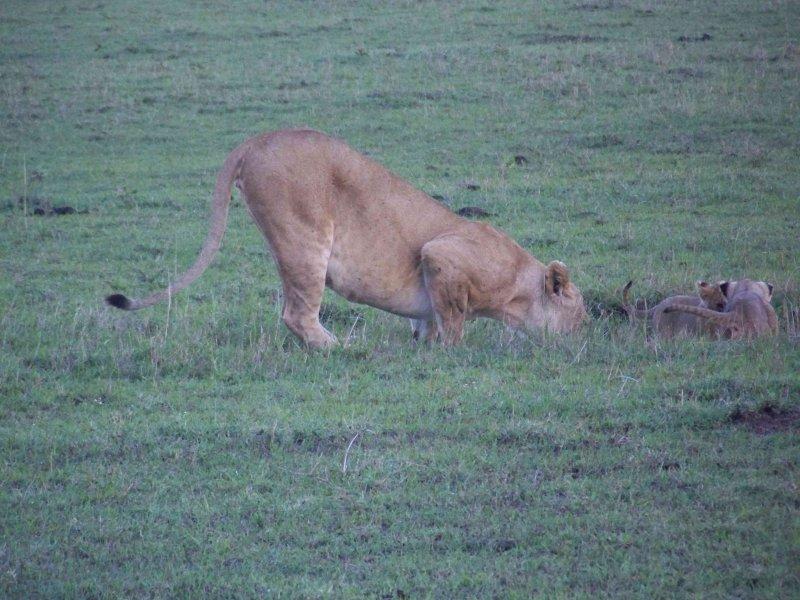 Kenya09-3361