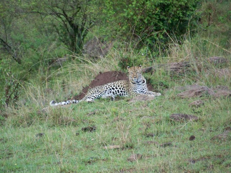 Leopard - she posed for us for 20 minutes-3618