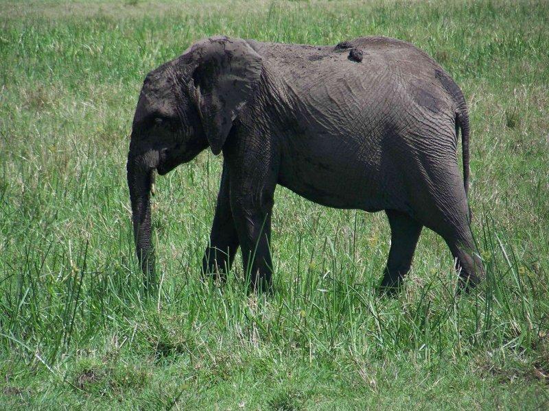 Kenya09-3821
