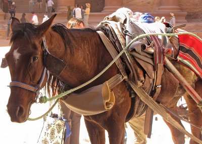 Plaza - carriage horse