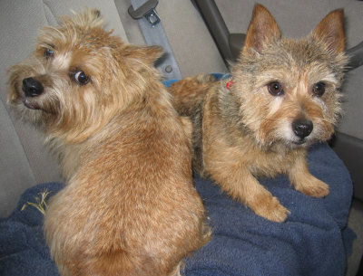 sophie and tucker.  Or tucker and sophie?