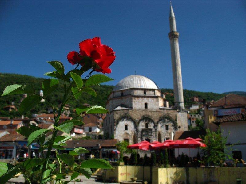 Red rose and Sinan Pasha