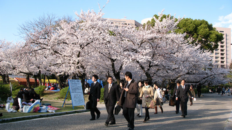 Salarymen strolling past hanami parties