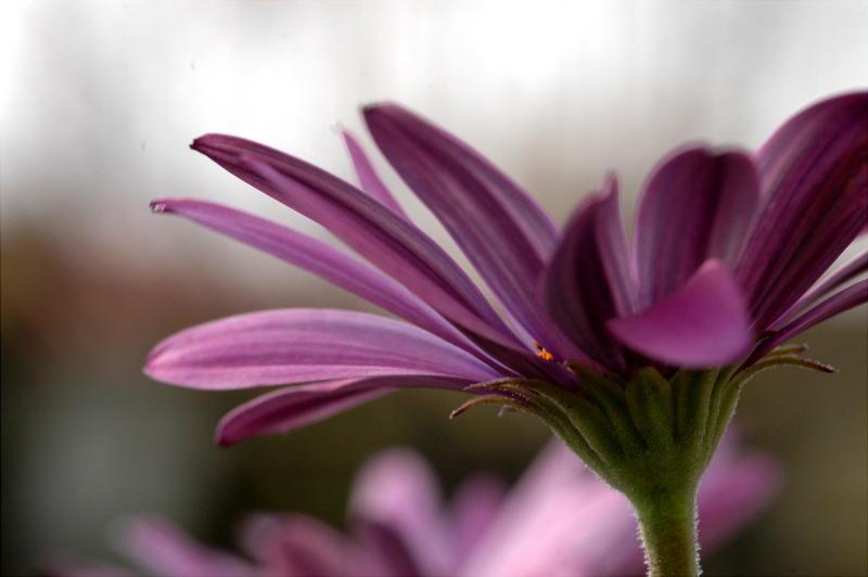 Flower of 2006