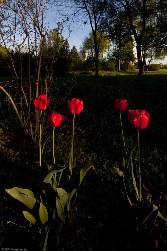Frühling im Donaupark