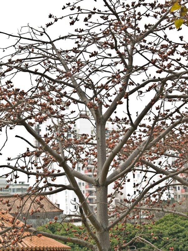 061Xiamen Blossom.jpg