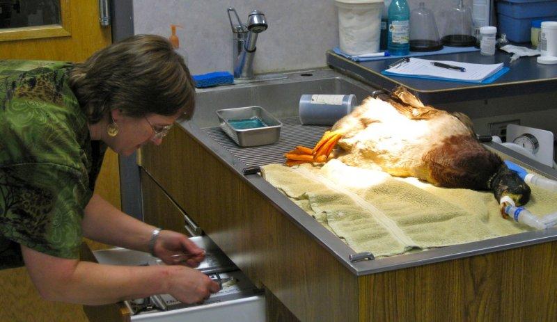 Dr Crystal Shropshire - Duck Foot Surgery - Alameda Pet Hospital IMG_1749.jpg