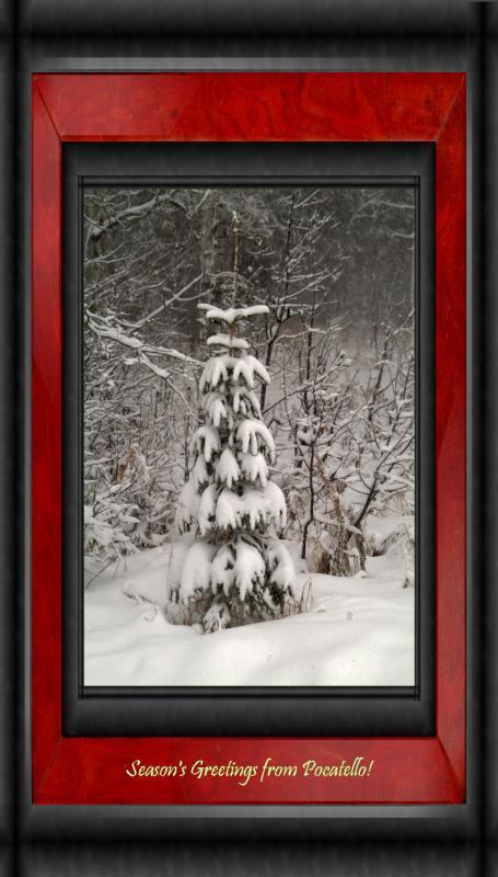 First Serious Snowfall DSCF0092.jpg