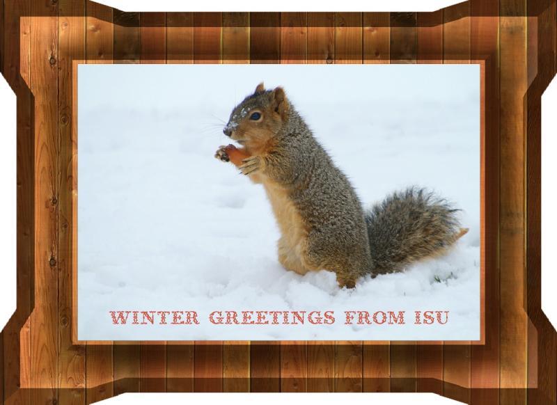 WINTER FOX SQUIRREL lowres DSCF0063.jpg