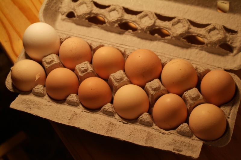 Paul and Elizabeth Frantz Farm Fresh Eggs BILD210.jpg