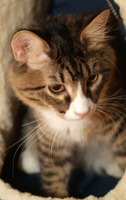 Cat DSCF0071.JPG
