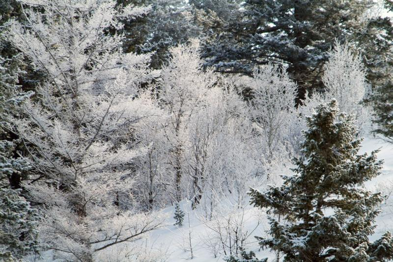 Frost smallfile DSCF0148.jpg