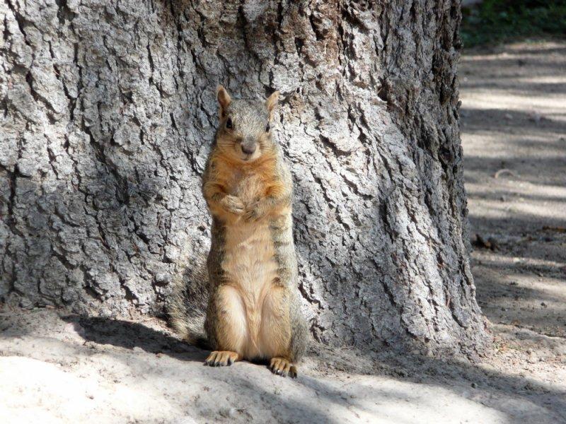 ISU squirrel girl P1020522.jpg