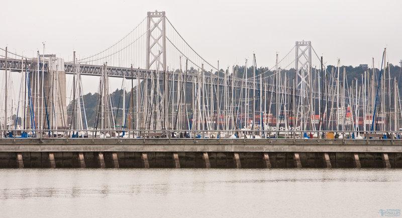 A Sea of Masts