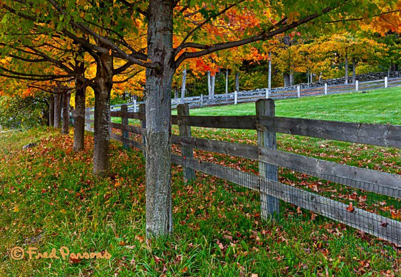 MG_9407 Maples & Fence