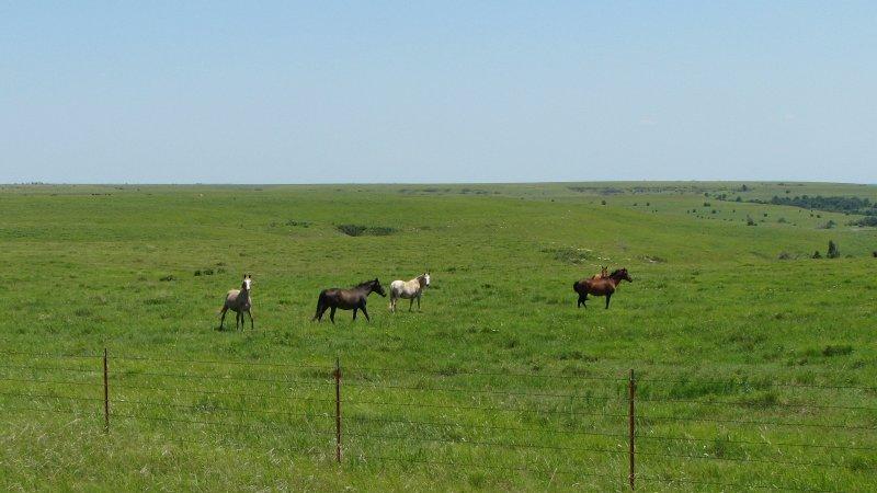 Mustangs near Grenola Kansas