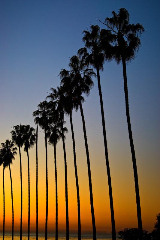 La Jolla Palms at sunset