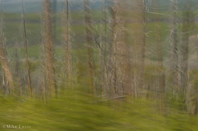 Yellowstone fire woods abstract