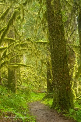 Columbia river gorge woods